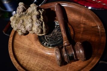 Une truffe blanche vendue pour 120000euros
