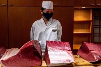 Japon Une célèbre vente aux enchères de thon affectée par la pandémie)