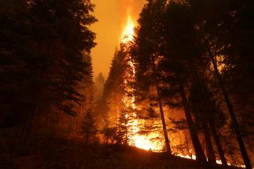 Selon le président Joe Biden Les incendies de forêt montrent «la nécessité de combattre le changement climatique»)
