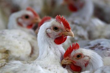 Rappel de viande de poulet de marque Rosemount