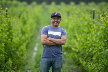 Travailleur agricole Dans la vigne àFarnham)