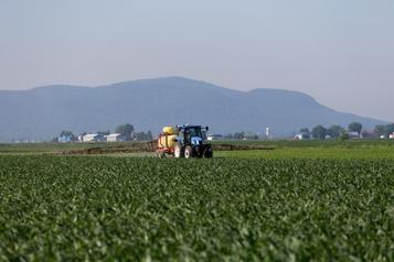 Pesticides «tueurs d'abeilles»: un usage injustifié dans 95% des champs du Québec