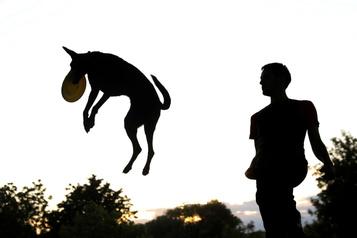 Et si la solution aux chiens dangereux se trouvait ailleurs?