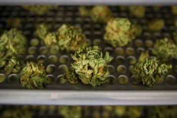L'écart de prix du cannabis augmente
