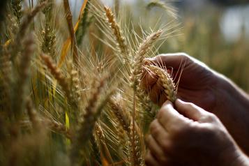 Climat: les principaux «greniers à blé» de la planète menacés