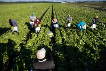 Les travailleurs étrangers temporaires, c'est votre affaire! )