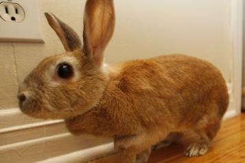 Petites bêtes Plaidoyer contre l'achat impulsifde lapins