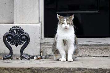 Le chat Larry, une décennie à Downing Street)