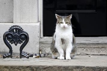 Le chat Larry, une décennie à Downing Street)