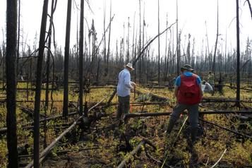 Les incendies plus fréquents nuisent aux forêts