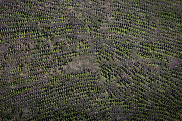 Deux milliards d'arbres d'ici 2030 Les premiers arbres bientôt plantés, dit Ottawa)