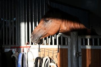 Le cheval comprend mieux quand on lui parle comme à un bébé )