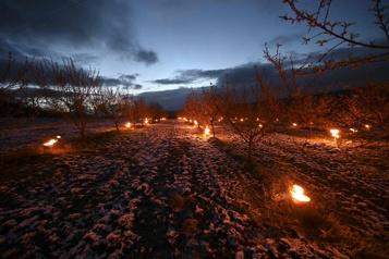 En Alsace, des «bougies» pour préserver les vergers du gel)