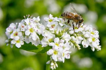 Prêter main-forte aux abeilles)