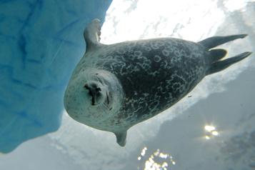 Des «espèces sentinelles» à risque dans l'Arctique