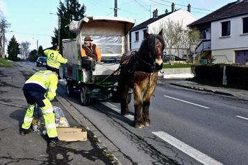 Planète bleue, idées vertes: un cheval pour le recyclage