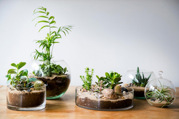 Vente de plantes pour les pouces pas si verts