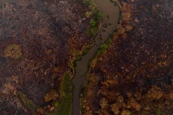 Des scènes de désolation dans le Pantanal brésilien)