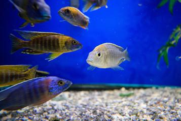 Des aquariums pour s'inonder de bien-être)