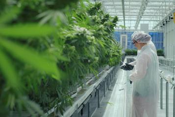 Aurora Cannabis ferme une de ses installations en Alberta)