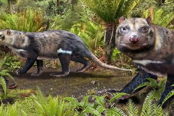 Chili Découverte des restes d'un nouveau mammifère vieux de 72 millions d'années)