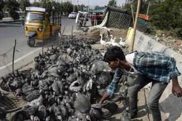 Marchés alimentaires L'OMS demande la suspension de la vente de mammifères sauvages vivants)