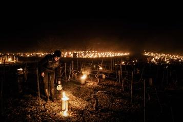 Gel Les vins de Bourgogne et de la vallée du Rhône redoutent une année noire)