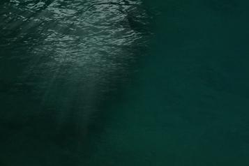 Changements climatiques: quel sort pour la vie marine?