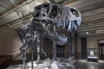 Le T-rex, une bête d'endurance et non de vitesse)