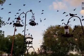 Des colibris par centaines sur son porche