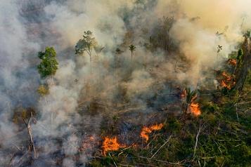 Destruction de l'Amazonie: Ottawa appelé à abandonner les négos commerciales)