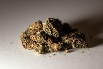 L'UFC tolérera la consommation de cannabis)
