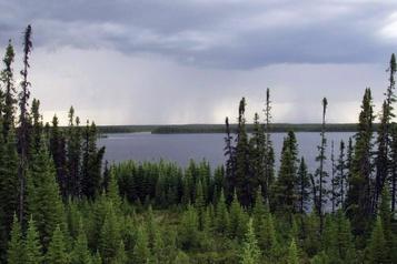 Incendies: la forêt boréale ne serait plus un puits de carbone