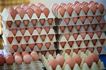 Augmentation substantielle des ventes d'œufs