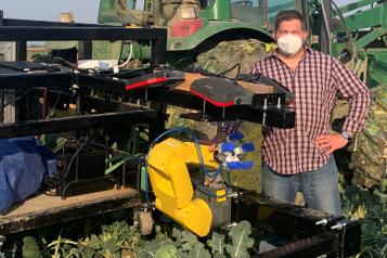 Pénurie de main d'oeuvre Le robot cueilleur de brocos à la rescousse des agriculteurs