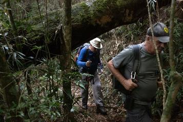 Brésil: un sentier pour sauver la forêt atlantique