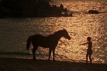 Trois films pour ceux qui aiment les animaux