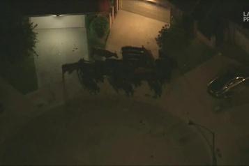 Des vaches s'évadent d'un abattoir à Los Angeles)
