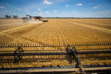 Nouveau repli des prix alimentaires mondiaux en juillet)