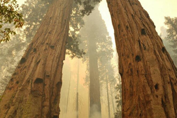 Californie Des bosquets de séquoias cernés par les flammes)