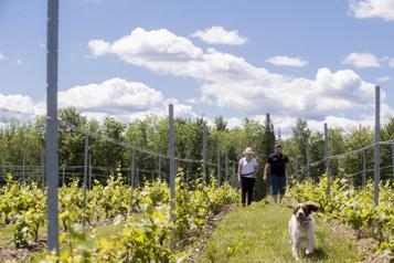 À la découverte des vins ducomté d'Acton)