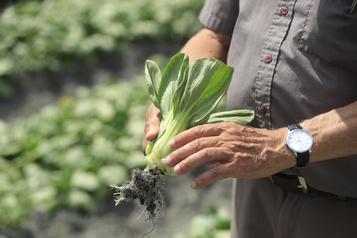 Légumes exotiques d'ici)