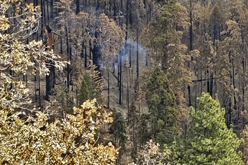 Incendie de forêt de l'été 2020 En Californie, un séquoia se consume encore)