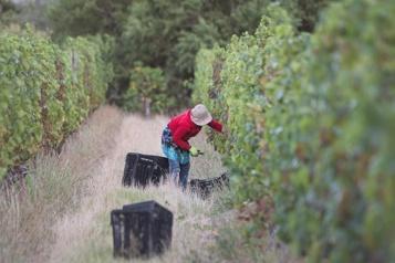 COVID-19 Les vignobles sud-africains souffriront de la prohibition)