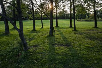 La vie dans les parcs: le réveil d'un parc)