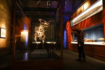 Londres L'univers de Fantastic Beasts en vedette au Musée d'histoire naturelle)