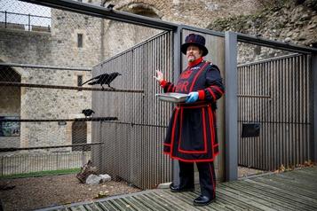 Tour de Londres La mission du «maître des corbeaux» compliquée par la pandémie)