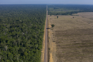 Brésil La déforestation en Amazonie serait à 94% illégale)