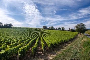 La Loire ne distillera pas ses vins)