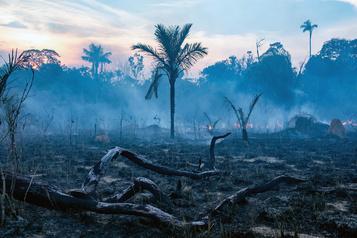 Augmentation de 28% des incendies en Amazonie brésilienne en juillet)